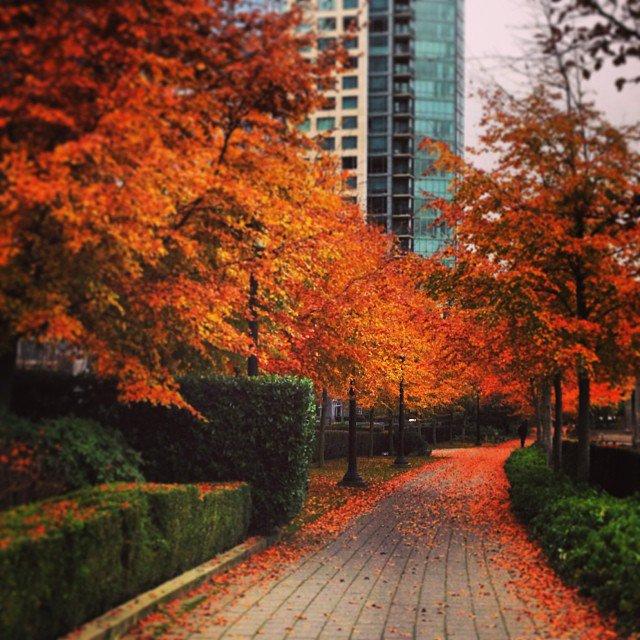 vancouver vancouverisawesome vansun360 coalharbour fall jj canadian city explore